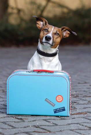 KeepPet международный проект паспортизации домашних животных
